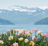 7-day Switzerland Panorama from $3,145